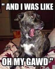 gawddog
